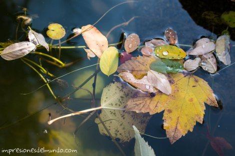hojas-en-la-fuente-jardin-botanico-madrid-impresiones-del-mundo