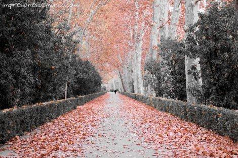 jardines-de-aranjuez-en-2-colores-madrid-impresiones-del-mundo