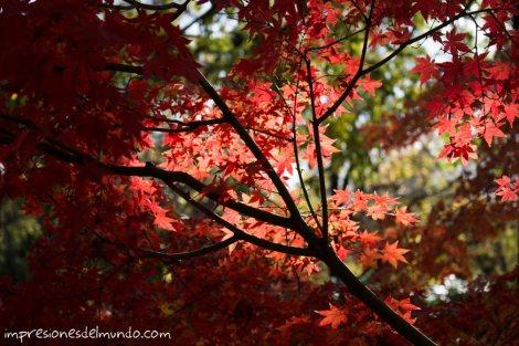 rama-y-arbol-rojo-jardin-botanico-madrid-impresiones-del-mundo