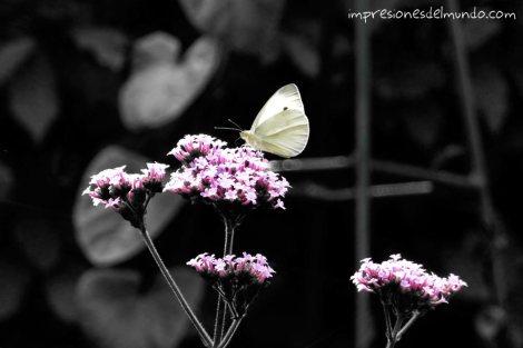 mariposa-Londres-impresiones-del-mundo