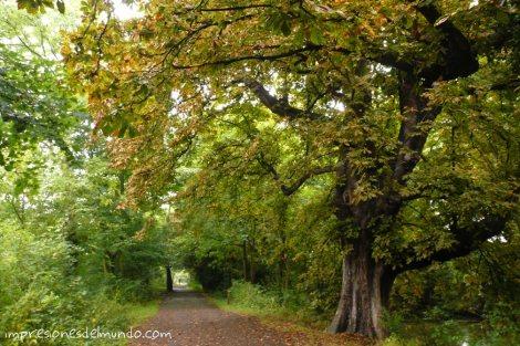 arboles-Richmond-Londres-impresiones-del-mundo