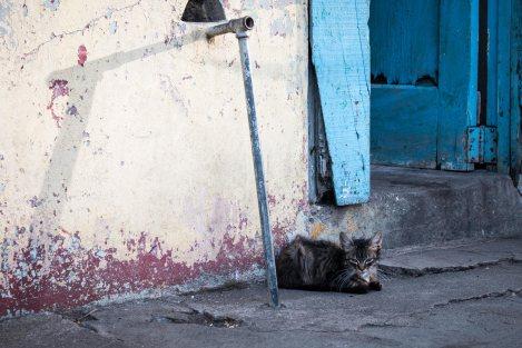 gato-impresiones-del-mundo