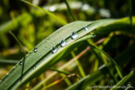 gotas-de-lluvia-en-hoja-impresiones-del-mundo